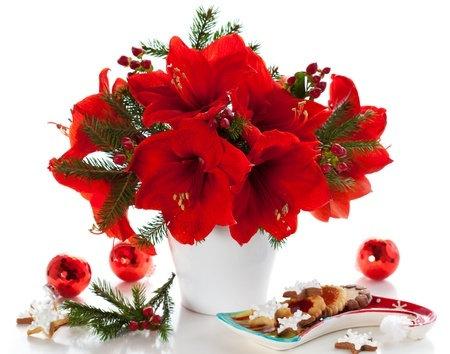 ch3 Christmas Amaryllis