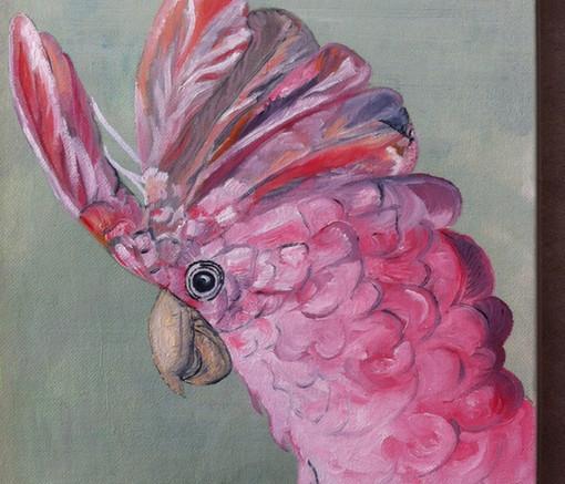 Perroquet COLBERT à la fraise