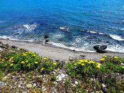 Blommor_ovanför_havet