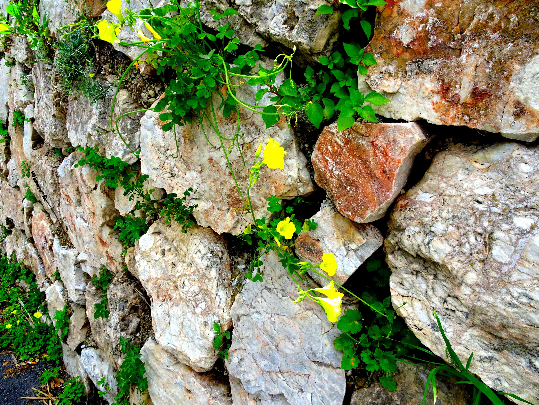 Blommor i mur