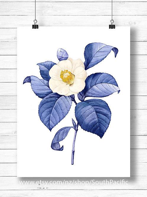 blue vintage camellia illustration engraving