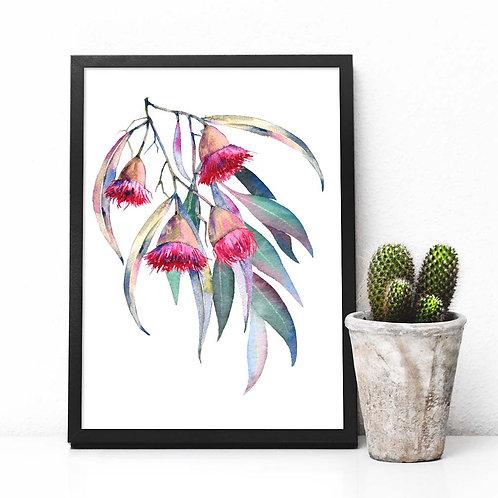 Watercolor Eucalyptus flowers | printable art hand painted