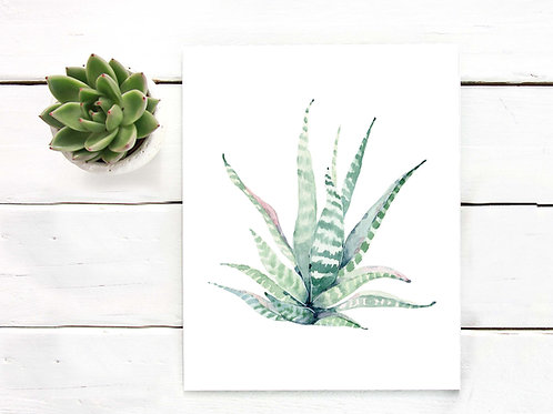 Haworthia watercolor painting, printable art