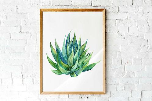 succulent cactus art print, crazy plant lady gift, Haworthia