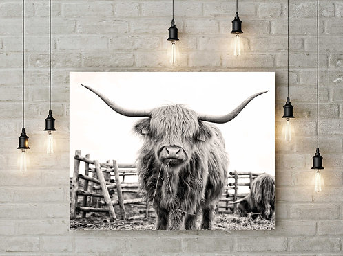 Highland cow | Black and white photo | Printable art cow farm rural art rustic