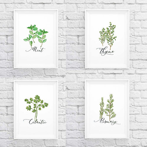 Watercolor herbs set of 4 Thyme Coriander Rosemary Mint | Printable