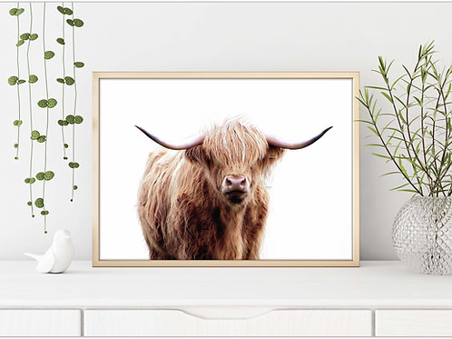 Highland cow, cow photo, art to print and frame, printable art, cow art print