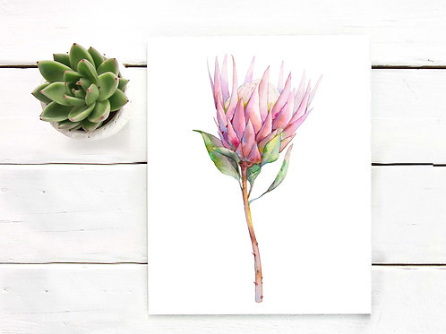 watercolor protea painting, pink flower wall art, artist poster print
