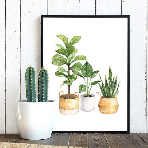 Watercolor house plants Fiddle leaf, sanserveria foliage  | Printable art