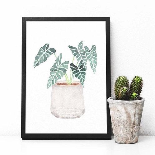 Watercolor house plant foliage  | Printable art Alocasia amazonica Polly