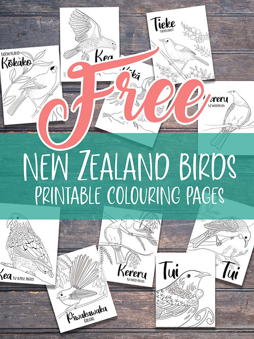 free new zealand birds colouring pages colouring sheets printable