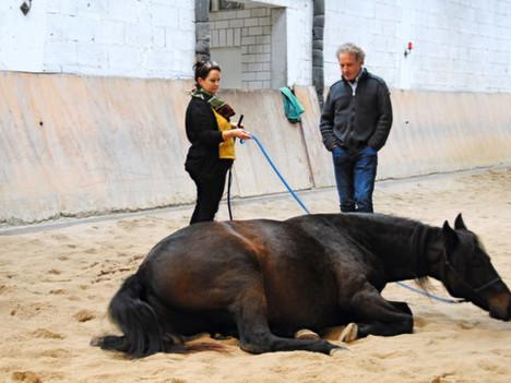 Christine, sag mal…?! 8 Fragen an eine Teilnehmerin der aktuellen Equine Coaching Ausbildung 2020