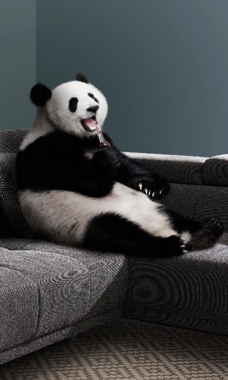 bobb Panda