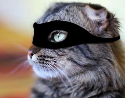 Il Gatto le prende in ostaggio,