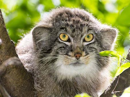 Il felino più antico della Terra