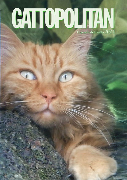 copertina gattopolitan per web.jpg