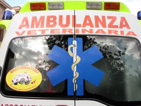 La prima ambulanza veterinaria