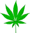 Cannabis PNG.png