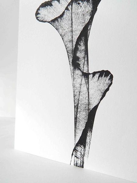 DavinaPulis-Anois-1.jpeg
