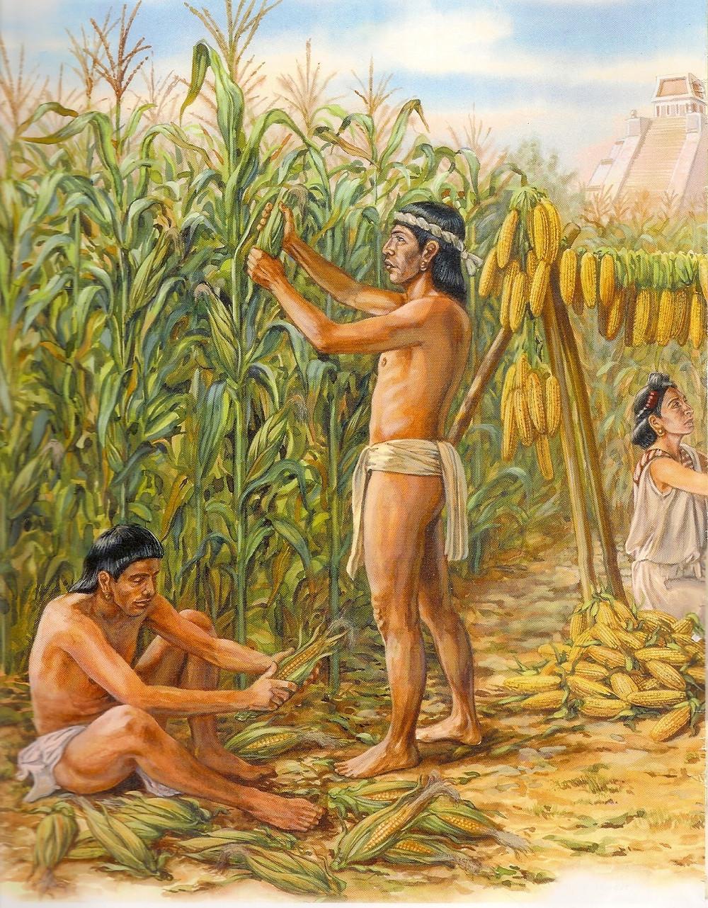 History of sweet corn