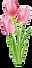 tulip.png