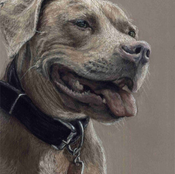 Custom pit bull dog painting portrait