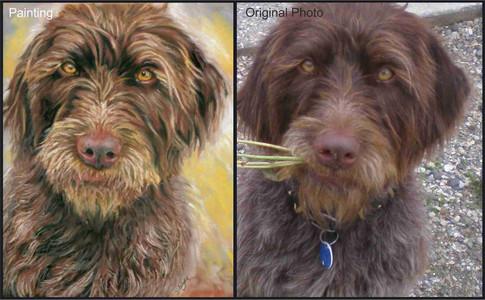 German Pointer dog custom pet portrait