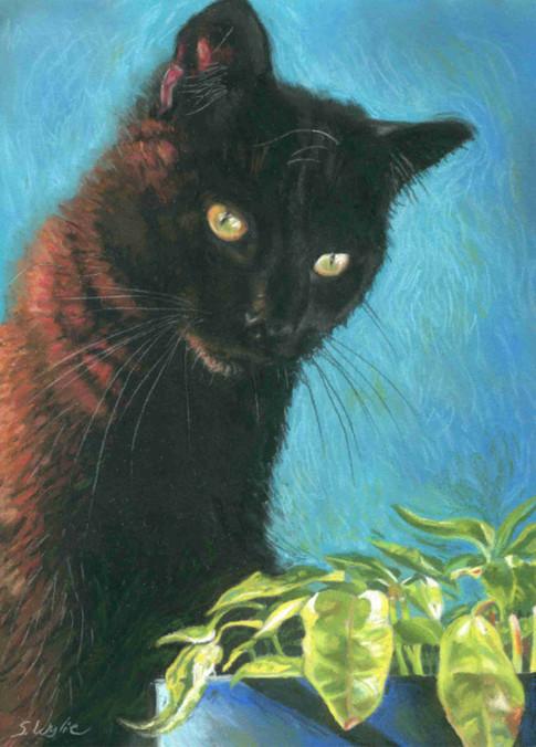 Custom black cat portrait.