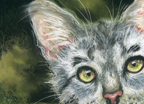"""Curiosity the Cat"" pet painting"