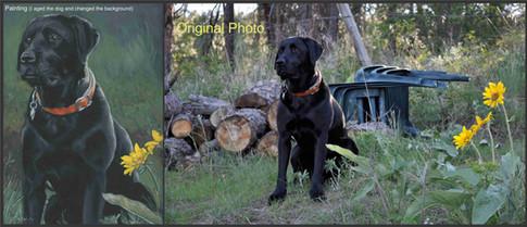 Black labrador retriever dog custom pet portrait