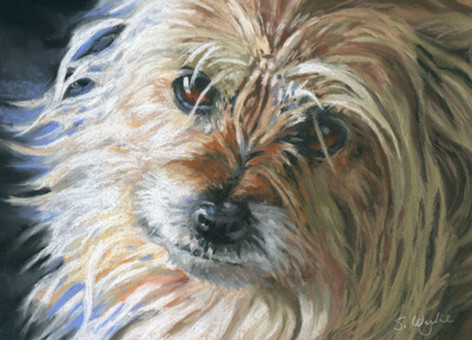 Cute terrier dog custom pet portrait