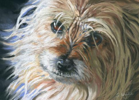 Cute terrier dog custom pet portrait