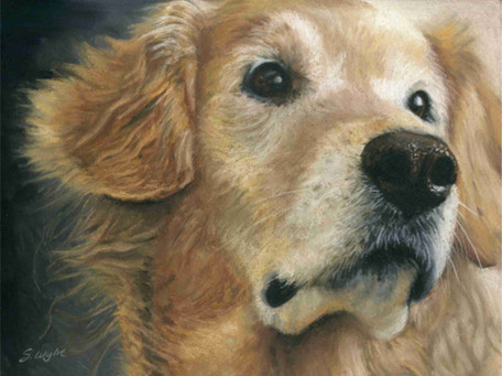 Commissioned pastel painting of a golden retriever.