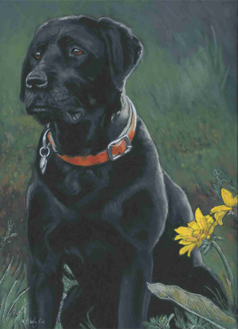 Black lab custom pet portrait