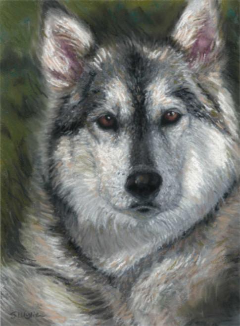 Custom malamute dog portrait.