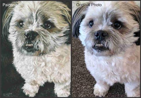 Shih Tzu dog custom pet portrait