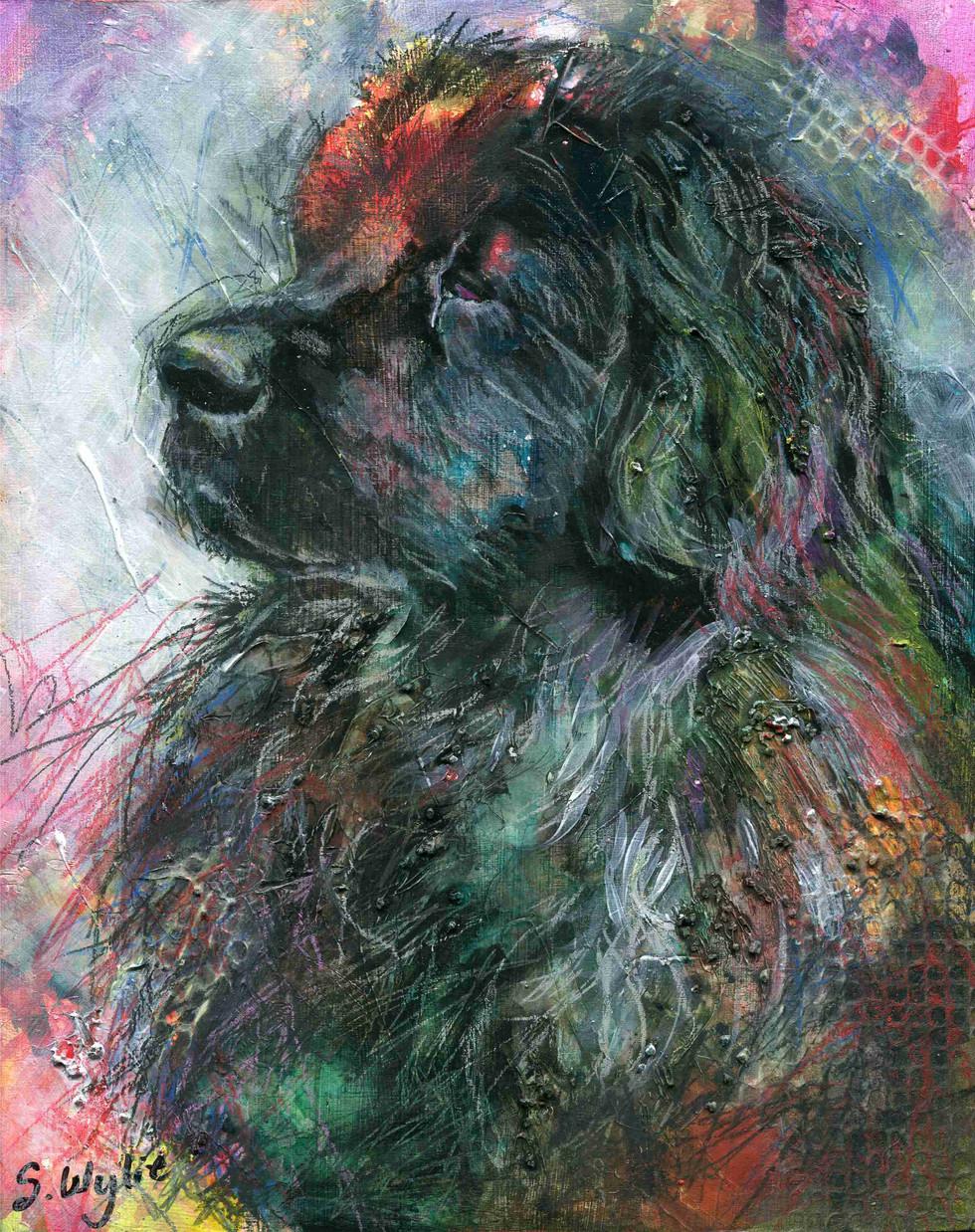 Newfoundland Dog Commission. 8x10