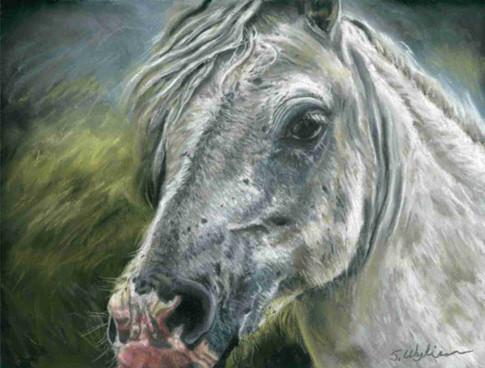 Custom white horse portrait.