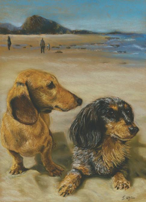 Custom mini dachshund dog portrait.