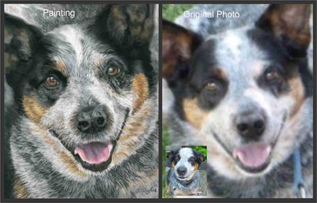 Blue Heeler dog custom pet portrait