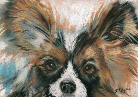 """""""Butterfly"""" Papillon dog pet painting"""