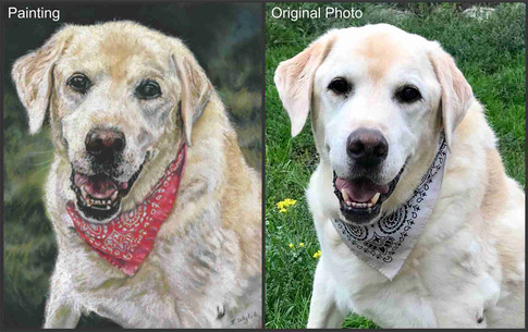 Golden Labrador Retriever dog custom pet portrait