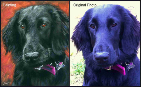 Commissioned pastel pet portrait of a flat coated retriever.