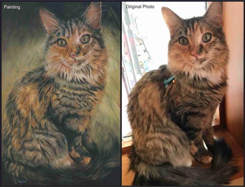Maine Coon cat custom pet portrait