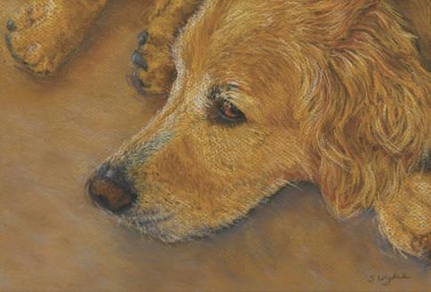 Custom golden retriever dog portrait.