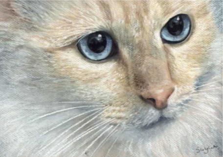Custom blue eyed cat portrait.