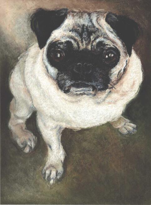 Custom pug dog portrait.