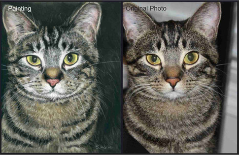Tabby cat custom pet portrait