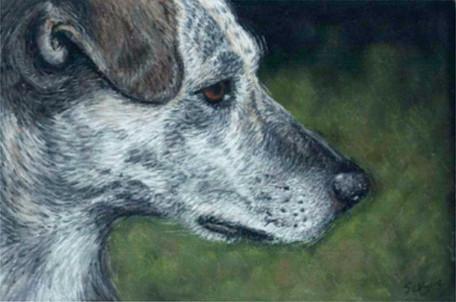 Custom mexican rescue dog portrait.