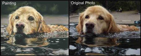 Golden Retriever swimming dog custom dog portrait
